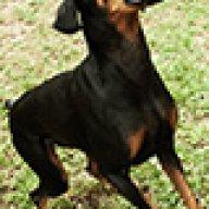 cliffdog