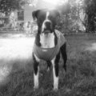 DoggyKong
